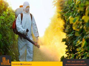 Jardineria-tipos-de-cuidados-mentenimiento-riego-control-contra-de-plagas-servicios-de-guatemala