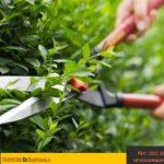 Jardineria-tipos-de-cuidados-mantenimiento-riego-poda-cesped-hierba-servicios-de-guatemala