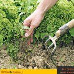 Jardineria-mantenimiento-tipos-de-cuidados-aspectos-riego-tipos-de-jardines-servicios-de-guatemala